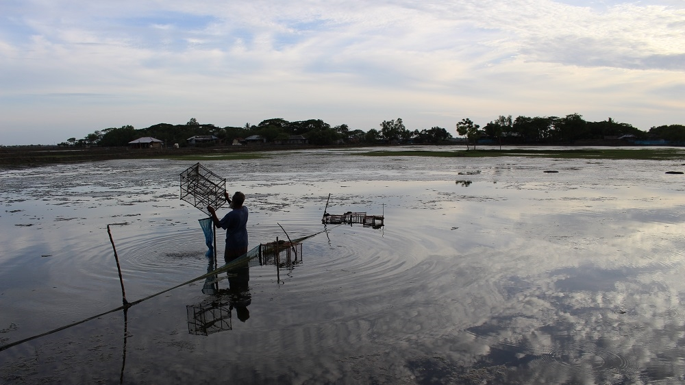 A shrimp farmer collectis the day's catch at dusk. While the salt water makes it hard to cultivate rice, the traditional crop in the area, shrimps thrive in  it [Neha Thirani Bagri/The GroundTruth Project]